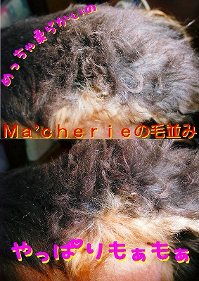 Ma'cherieの毛
