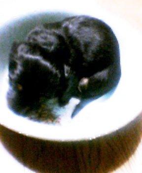 洗面器犬Iesus