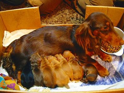 メイプル出産