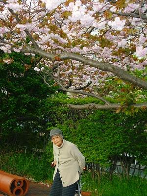 桜の木の下でΣp[【◎】]ω・´) !!