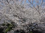 お花見公園-2