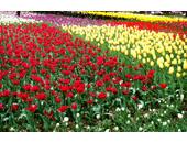 show_jpeg_20080321135644.jpg