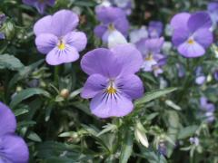 080705植物達9