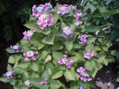 080705植物達5