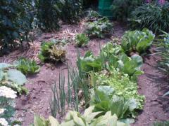 080705野菜1