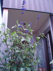 080705植物達6