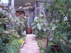080705植物達1
