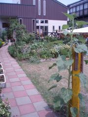 080705植物達3