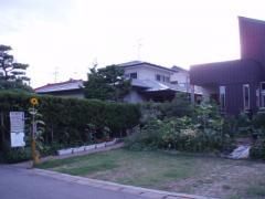 0807門番ヒマワリ2