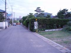 0807門番ヒマワリ1