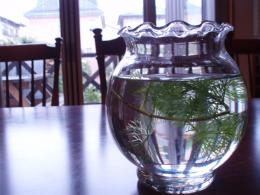 0807金魚鉢