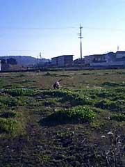 070312_hara.jpg