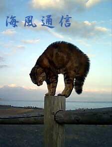 070318_cat.jpg