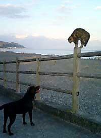 070318_cat2.jpg