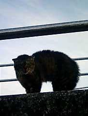 070319_cat1.jpg