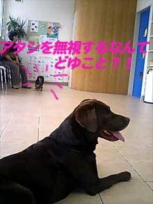 070608_wan.jpg
