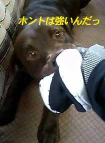 071018_honto.jpg