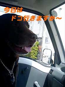 080428_kuruma.jpg