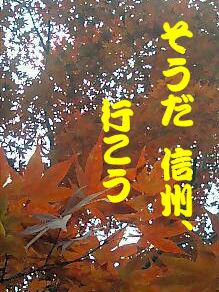 081110_momiji.jpg
