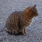 cats_0001.jpg