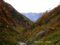 仙人谷の紅葉と白馬岳