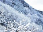 栗沢途中の樹氷