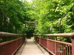 22森の中の釣り橋