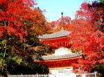 10 紅葉に包まれる多宝塔