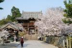 08 桜満開の山門前