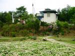 49 ネパールの寺院