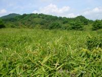 23 東おたふく山の笹原と芝栗