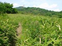 24 笹原と萩