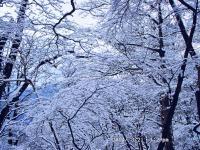 07 樹氷