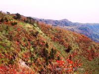 15前山方面紅葉