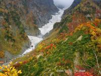 三ノ窓雪渓の紅葉