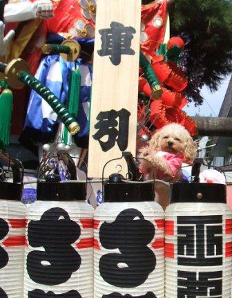 秋祭り さくら山車 002