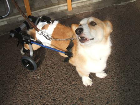 ベガくん&車椅子 007