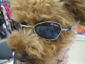 岩手 犬 盛岡 ペット グッズ サングラス 犬服