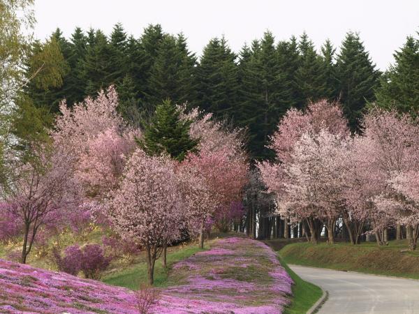 緑と桜色~~