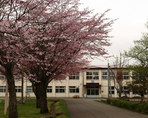 学校には桜が似合いますね~