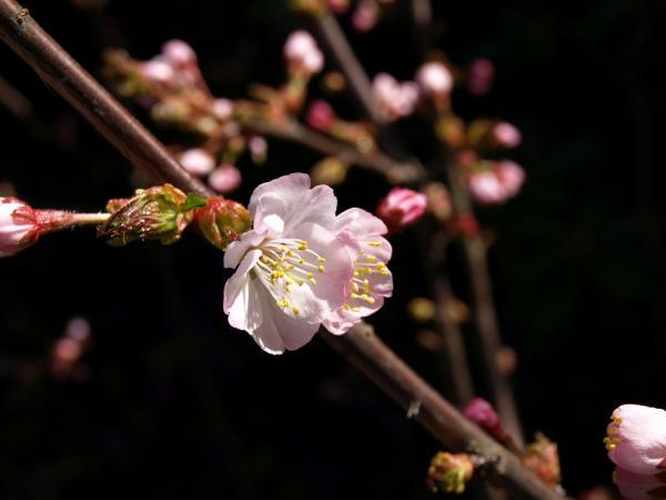 桜って、やっぱり和だな~~