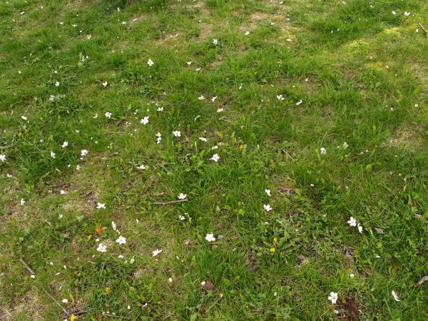 花ごと散ってます。。。