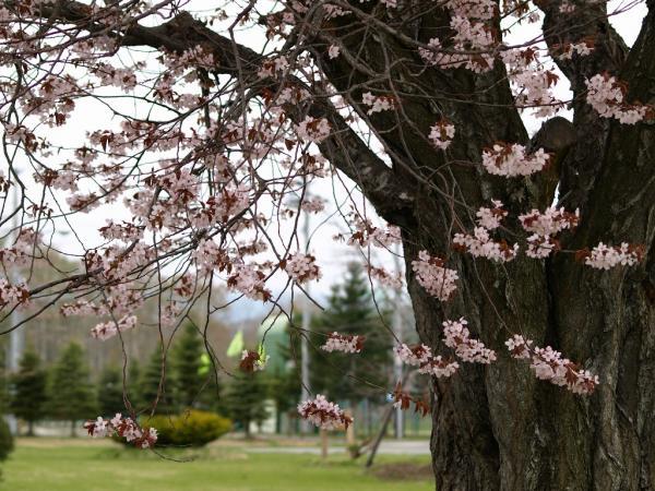 静かに咲く花たち。。。