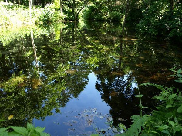 わかりづらいのですが、水面に木々が映ってるわけです。。
