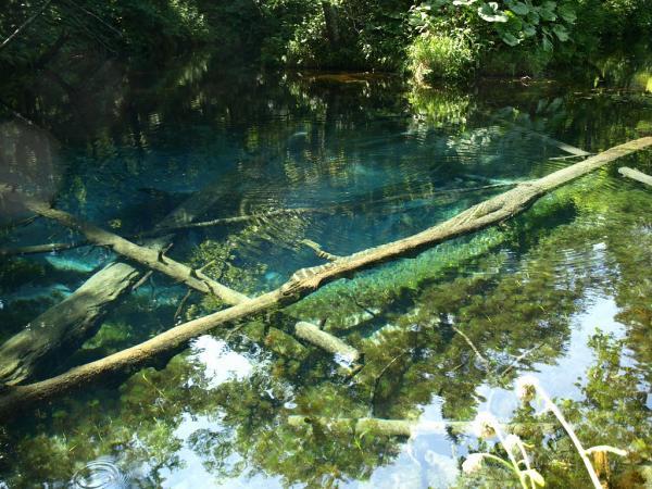 波紋は~この池に棲むお魚さんによるものです~~