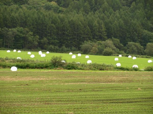 白い牧草ロールが。。。