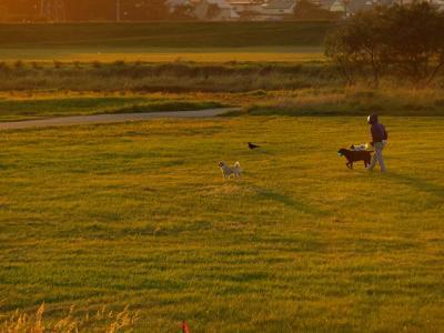 一羽と三匹と一人~見つめる先に夕陽