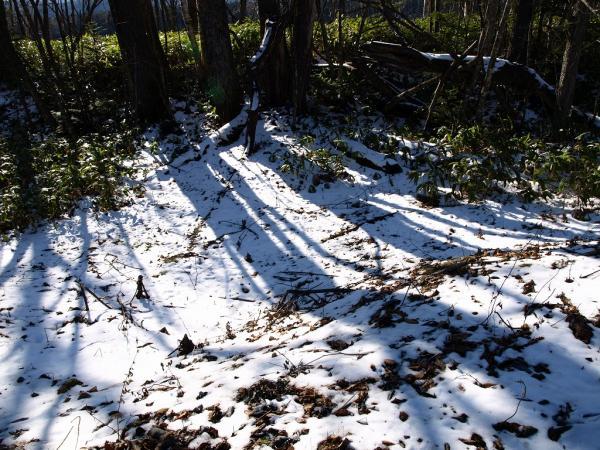 木の影。。冬だなぁ~