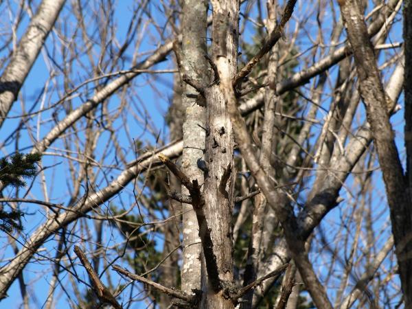 写真中央あたりに小さな鳥が写っています。。