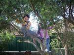 木登り姉弟